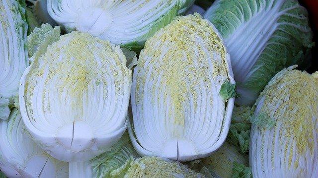 Chinese Cabbage Vegetable Harvest  - allybally4b / Pixabay